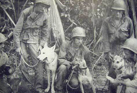 26th Infantry Dog Scout Platoon