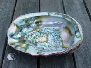 The abalone's iridescent inside shell