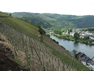 Example of terroir
