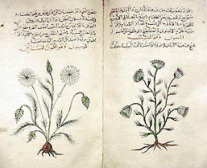 Dioscorides' Materia Medica, c. 1334 copy in Arabic, describes medicinal features of cumin and dill