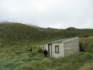 Castaway hut at the northern end of Antipodes island