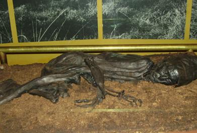 Tollund Man bog body on display at Silkeborg Museum in Denmark