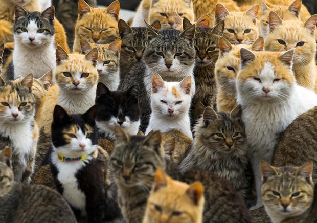 A group of cats on Japan's Aoshima Island
