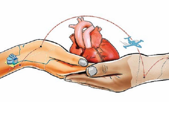 Artistic rendering of a heart transplant featuring two hands holding one heart
