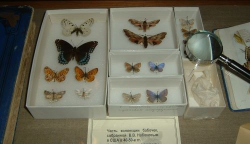 Butterflies from Vladimir Nabokov's Collection