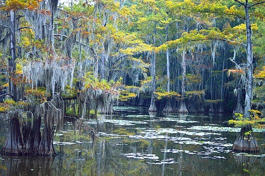 Caddo Lake surrounded by trees